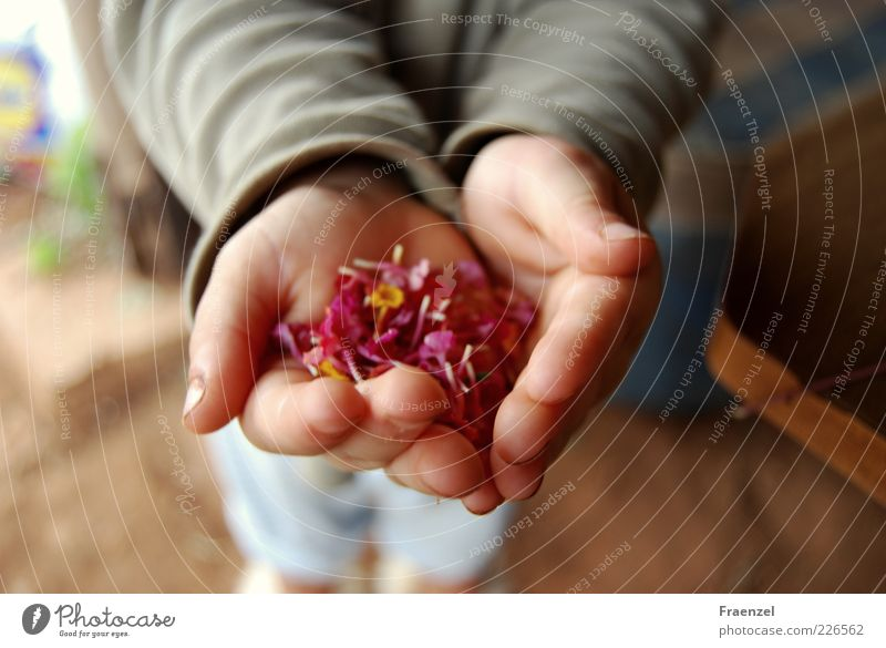 Take it! Human being Toddler Infancy Hand 1 1 - 3 years Plant Exterior shot Morning Blur Bird's-eye view Indicate Retentive Blossom leave Collection