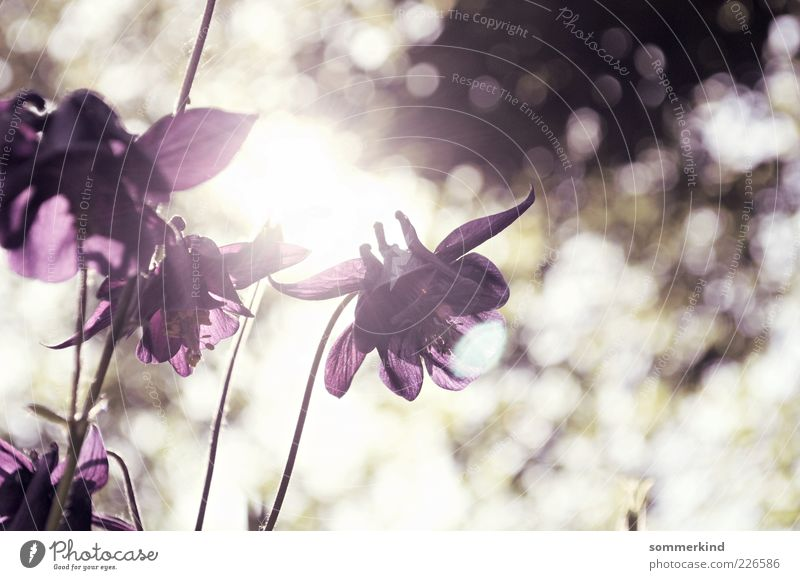 Here comes the sun Nature Spring Summer Beautiful weather Plant Flower Blossom Wild plant Illuminate Bright Violet White Harmonious Blur Blossom leave