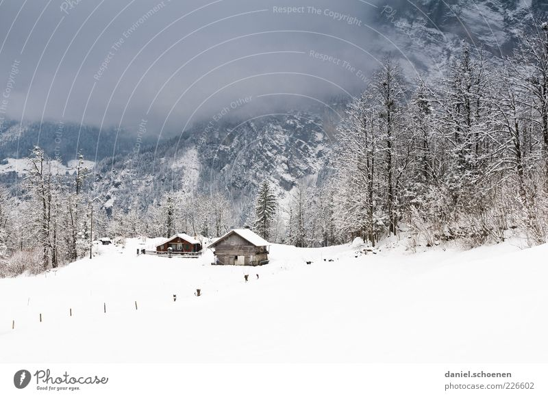 finally snow again! Winter Snow Environment Nature Climate Bad weather Ice Frost Alps House (Residential Structure) Hut Calm Subdued colour Copy Space top