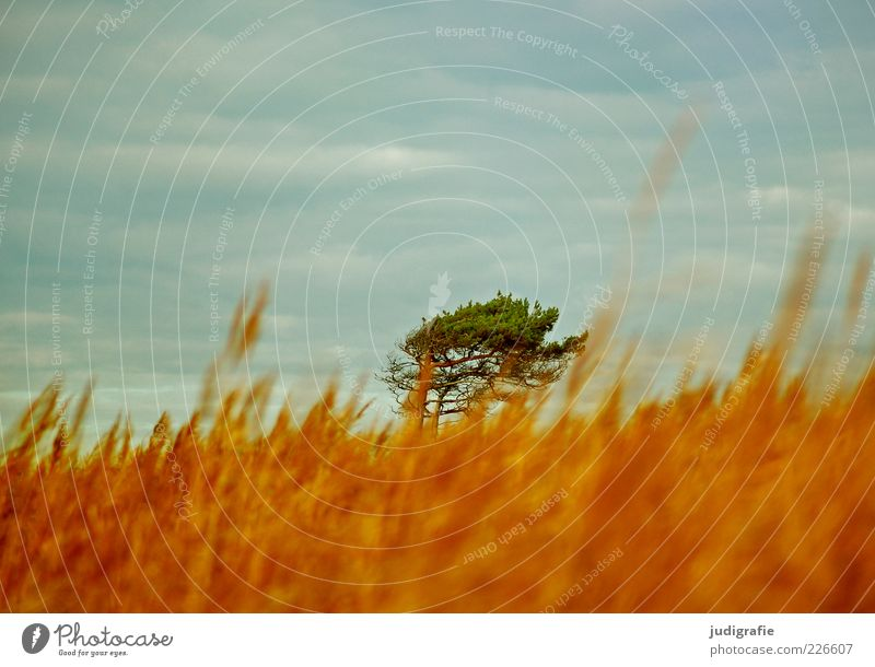 western beach Environment Nature Landscape Plant Sky Clouds Climate Wind Tree Grass Coast Baltic Sea Darss Western Beach Natural Warmth Wild Moody Idyll