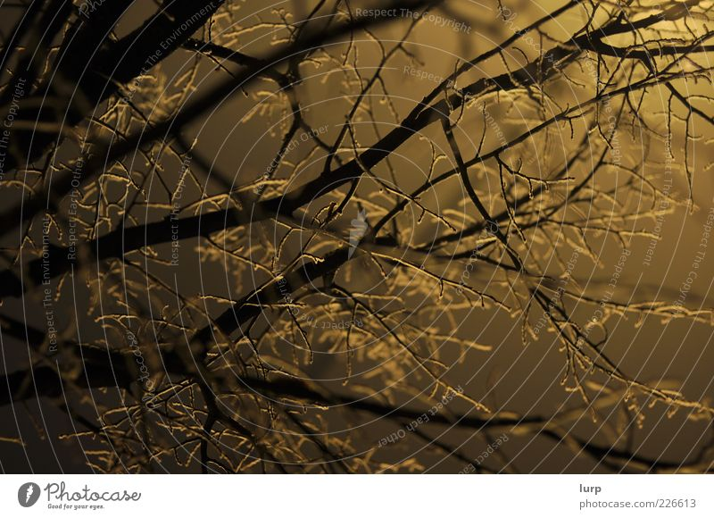 Nature Tree Plant Winter Yellow Cold Environment Wood Ice Fog Treetop Copy Space Branchage Twigs and branches Branched Night