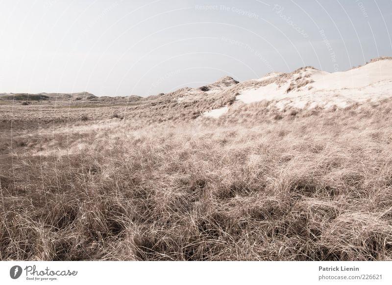 Dune Worlds (II) Environment Nature Landscape Plant Elements Earth Air Climate Weather Wind Bushes Hill Coast North Sea Island Moody Longing Wanderlust Amrum