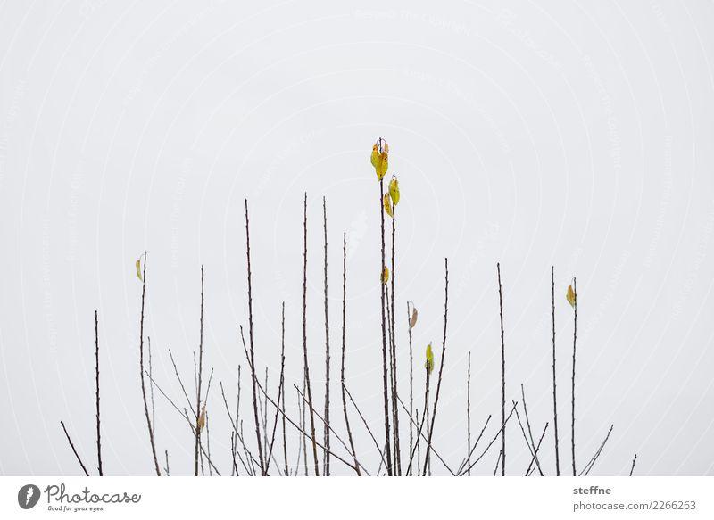 Tree Leaf Winter Garden Gloomy Bushes Dreary Cherry tree Javelin