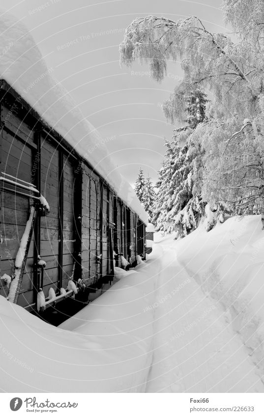 snow express Winter Snow Ice Frost Tree Deserted Train station wagon Vintage car Railroad Freight train Platform Wood Steel Rust Black White Enthusiasm Discover