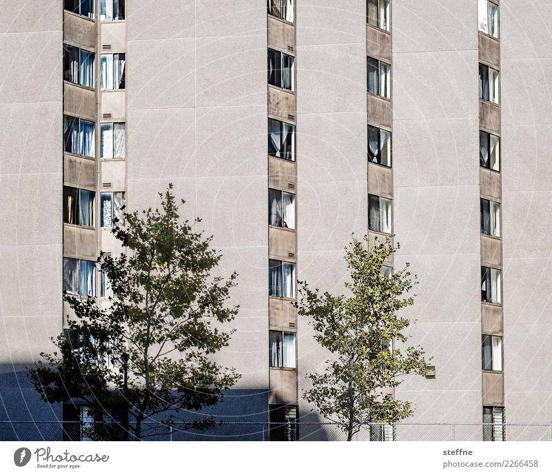 Town Tree House (Residential Structure) Facade Living or residing High-rise Washington Washington DC