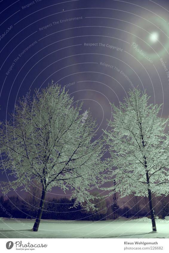Sky Blue White Beautiful Tree Calm Winter Snow Stars Climate Romance Fantastic Moon Beautiful weather Silver Night sky