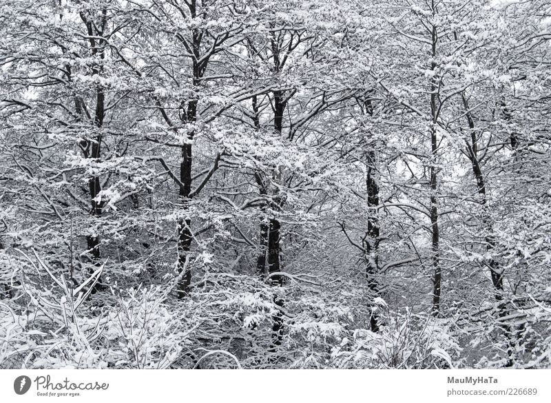 Winter Nature Landscape Plant Cloudless sky Horizon Climate Bad weather Ice Frost Snow Tree Park Forest Wood Water Old Cool (slang) Dark Cold Natural Positive