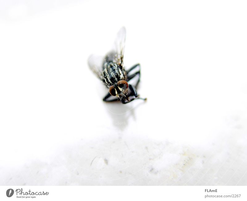 Dead Fly dead fly Macro (Extreme close-up) Death