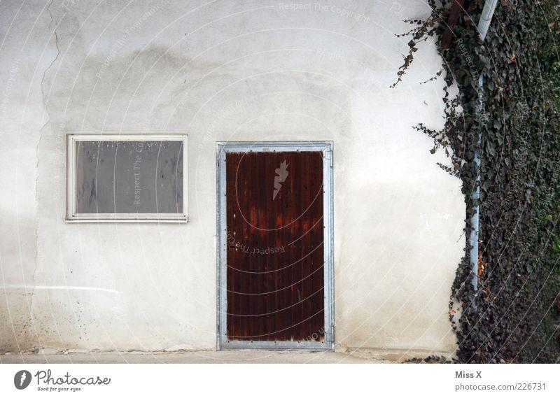 Plant Leaf House (Residential Structure) Wall (building) Window Wall (barrier) Door Facade Simple Farm Ivy Tendril Front door Wooden door