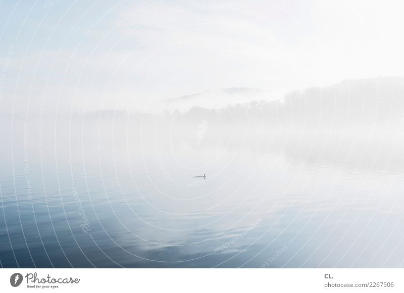 Sky Nature Water Landscape Animal Clouds Calm Winter Forest Environment Freedom Essen Lake Bird Fog