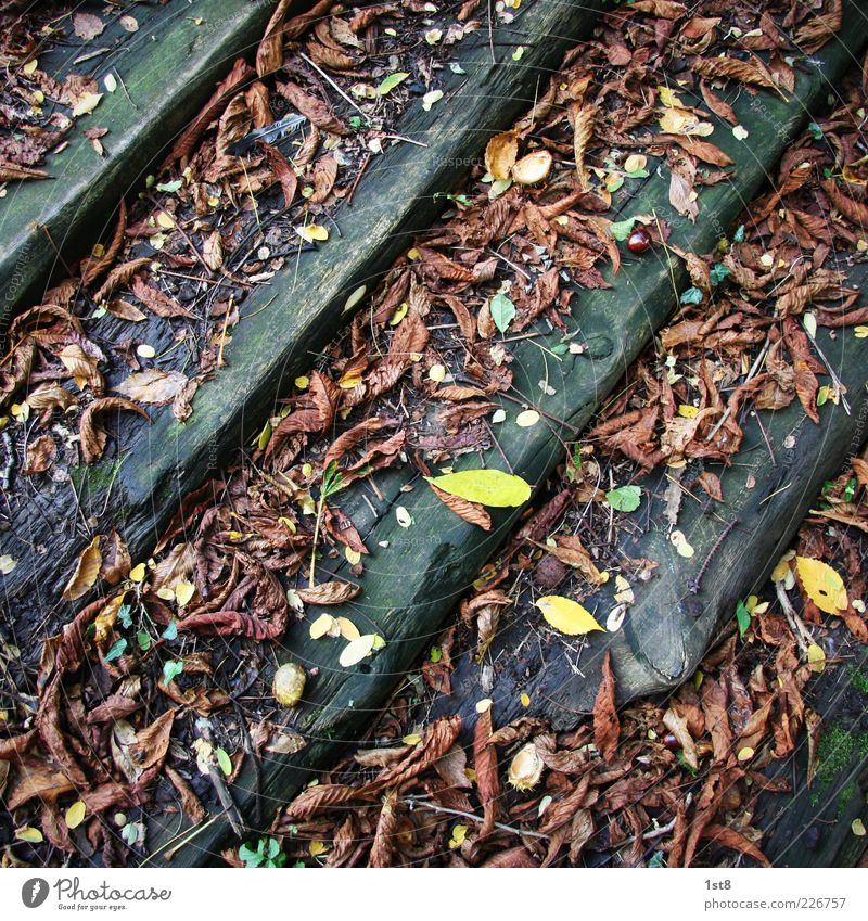 Leaves & Stripes Environment Nature Plant Leaf Old Discover Brown Multicoloured Yellow Stairs Wood Autumn Autumn leaves Putrid Colour photo Detail Deserted