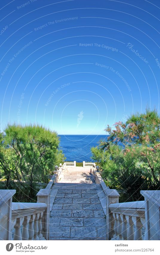 Experience the sea Water Cloudless sky Summer Beautiful weather Plant Bushes Garden Coast Ocean Stairs Terrace Esthetic Handrail Vantage point Mediterranean