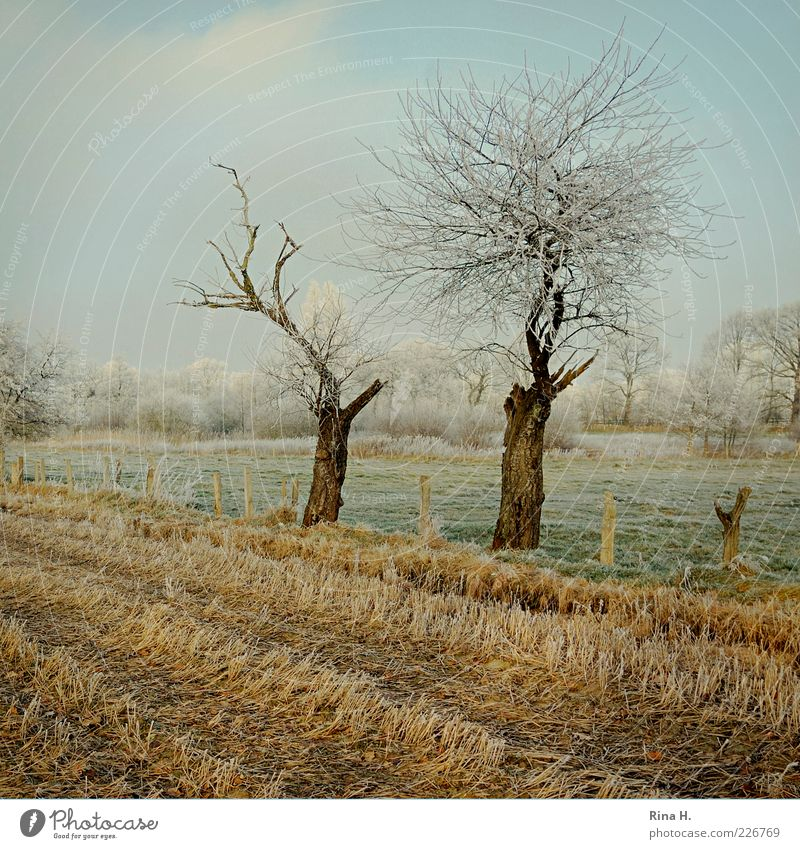 Winter stubble field Nature Earth Sky Tree Meadow Field Schleswig-Holstein Cold Yellow Green Mature Colour photo Deserted Day Hoar frost Leafless Tree trunk