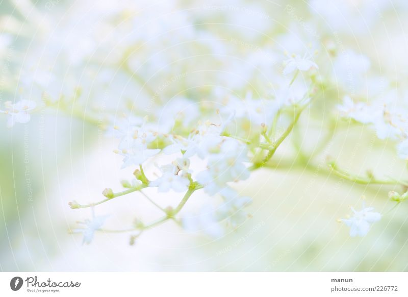 Nature White Beautiful Tree Plant Leaf Blossom Spring Food Bright Healthy Fresh Natural Delicate Pure Fantastic