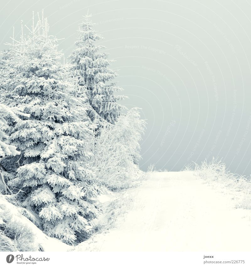 chill Nature Landscape Weather Ice Frost Snow Lanes & trails Gray White Calm Cold Fir tree Colour photo Subdued colour Exterior shot Deserted Day