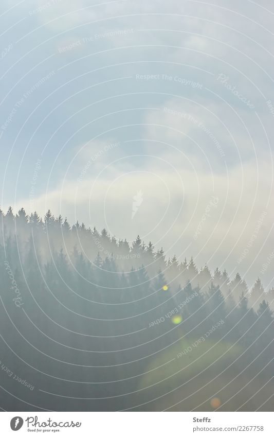 morning light Environment Nature Landscape Air Sky Clouds Weather Beautiful weather Fog Tree Coniferous trees Forest Hill Edge of the forest Mood lighting