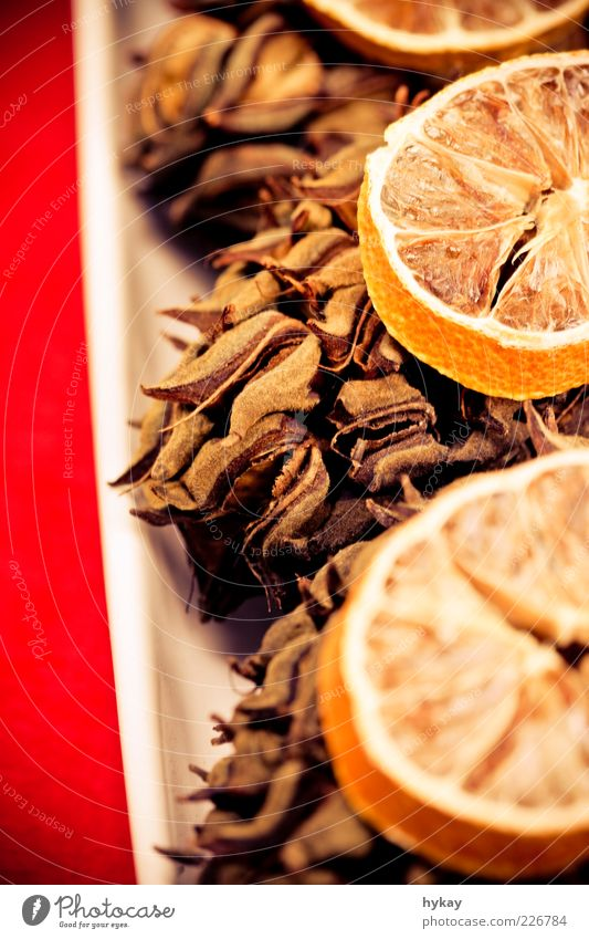 tattoo Fruit Fragrance Natural Dry Red Beautiful Orange Cone Dried fruits Colour photo Interior shot Close-up Detail Flash photo Blur Copy Space left