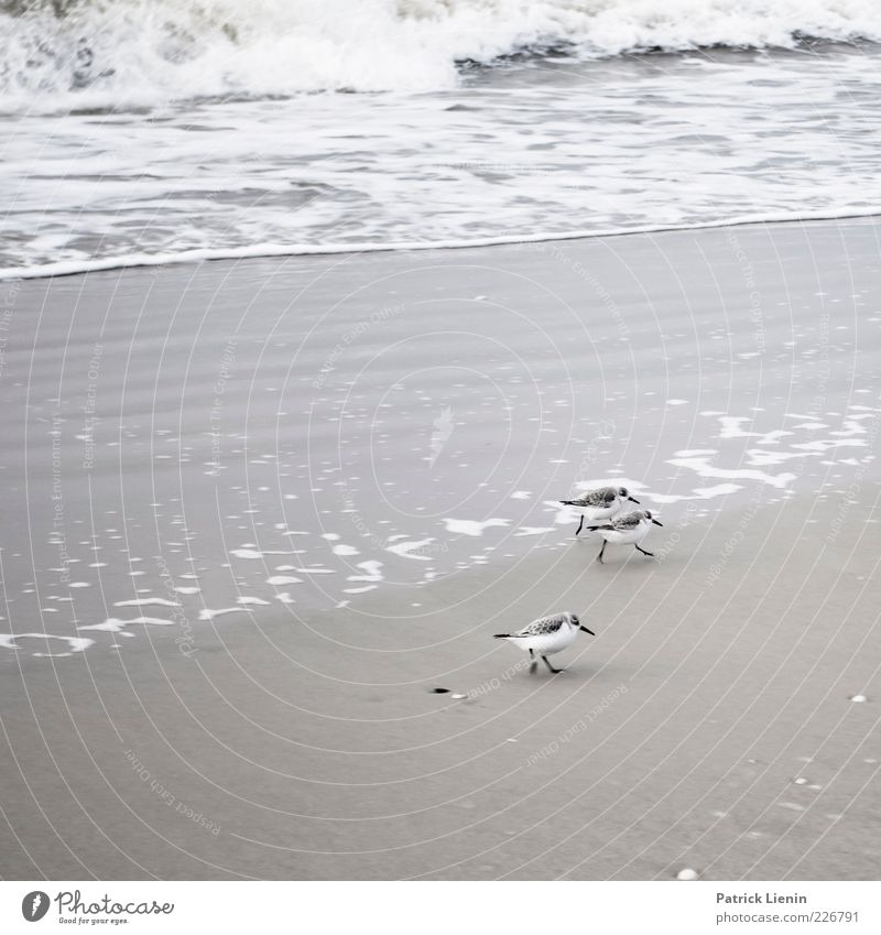 Nature Water Beautiful Ocean Beach Animal Environment Sand Small Coast Funny Weather Bird Waves Elegant Walking