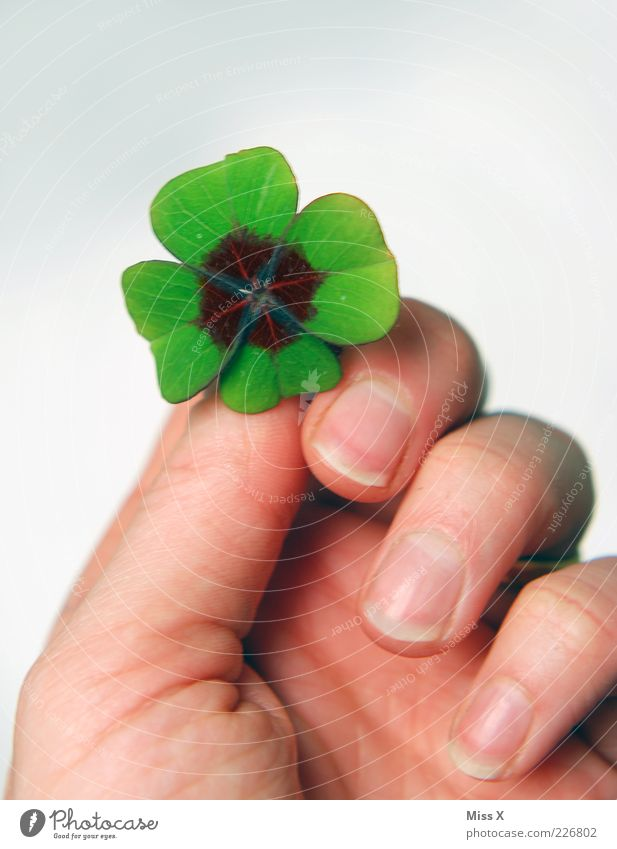 I'll give you my happiness Hand Fingers Leaf Happy Four-leafed clover Four-leaved Cloverleaf Donate Good luck charm Symbols and metaphors New Year's Party