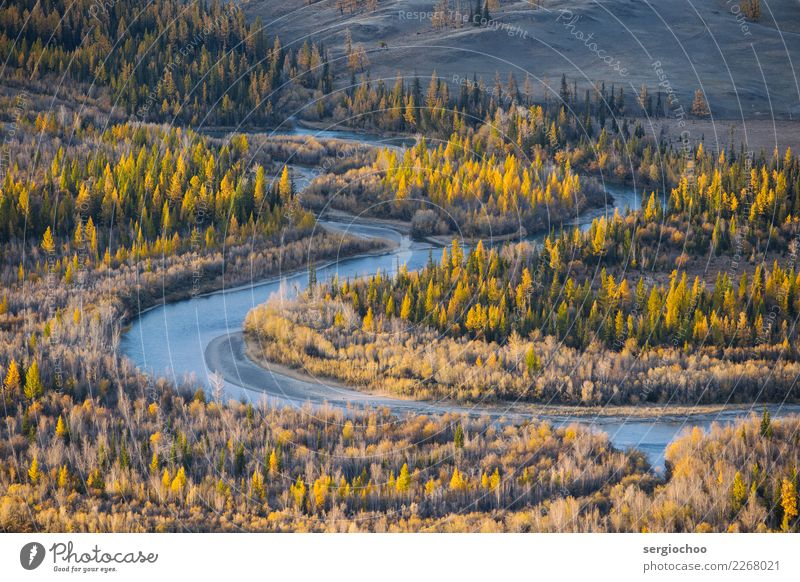 curve Environment Nature Landscape Climate change Beautiful weather Tree Bushes Forest River bank Vacation & Travel Far-off places Bright Valley Curve Point
