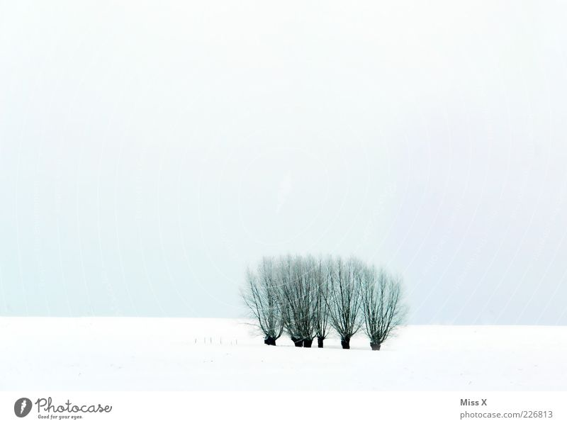 pastures Nature Landscape Winter Tree Field Cold White Willow tree Sky Colour photo Subdued colour Exterior shot Deserted Copy Space top Copy Space bottom Light