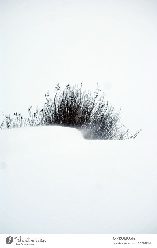 White Cold Snow Wind Bushes Twigs and branches Snowstorm Snowdrift