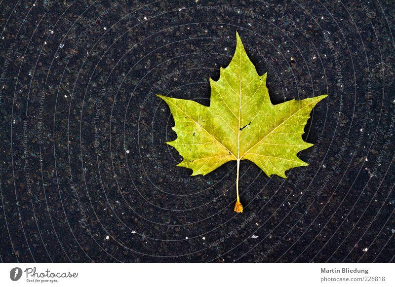Nature Green Leaf Black Yellow Autumn Gray Lie Design Concrete Simple Asphalt Sharp-edged Rachis Early fall