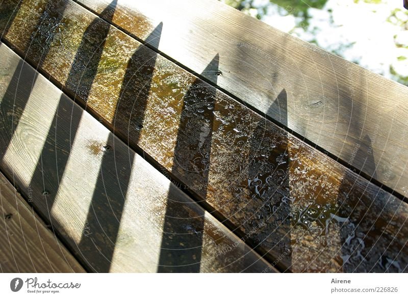 sharpened! Balcony wood Line Arrow Sharp-edged Bright chill Wet Point Brown Gray White Animosity Protective Defensiveness Joist Aggression Threat Protection