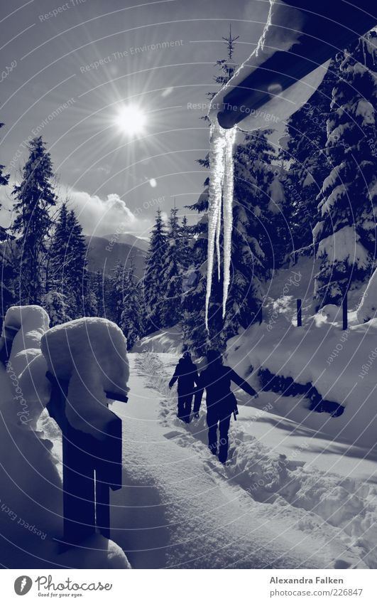 Snow with sun. Leisure and hobbies Vacation & Travel Tourism Trip Freedom Winter Winter vacation Mountain Hiking Austria Snow layer Human being Life 2
