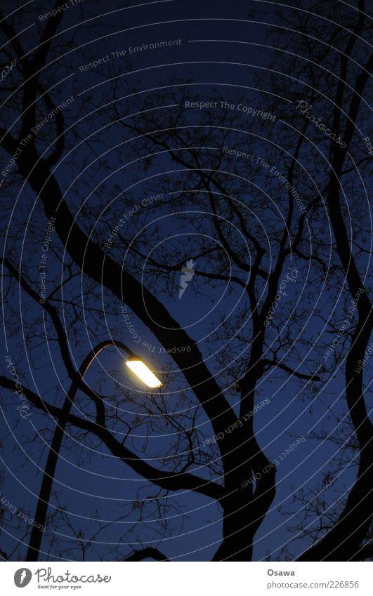 The last one turns off the light Tree Lantern Street lighting Silhouette Black Blue Sky Twilight Light Artificial light Evening Night Portrait format Slumber