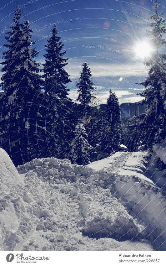 Sky Nature Blue Plant Sun Winter Forest Cold Snow Mountain Environment Landscape Lanes & trails Weather Climate Hill