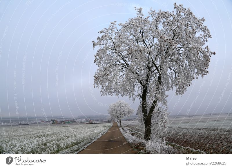 morning frost Winter Tree Cold Snow Snowfall Lanes & trails December January February Morning Frost Dawn Sunrise Ground Ice Street White Hoar frost Mature Sky