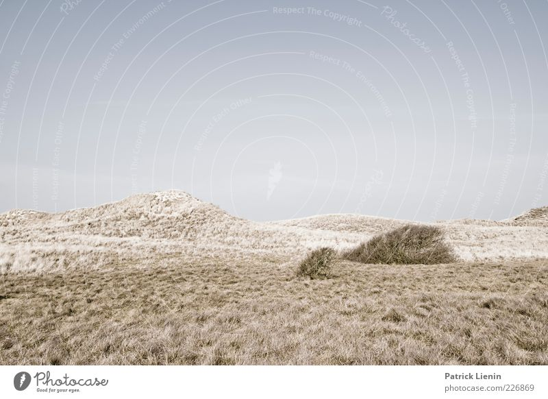 Sky Nature Plant Loneliness Environment Landscape Moody Air Weather Wind Climate Elements Hill Dune Sparse Cloudless sky