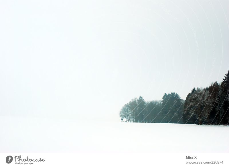 White and forest Landscape Sky Clouds Winter Bad weather Fog Snow Tree Forest Bright Black & white photo Exterior shot Deserted Copy Space left Back-light