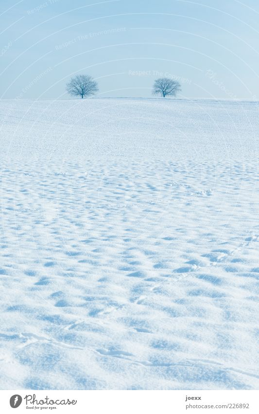 Sky Nature Blue White Tree Calm Winter Far-off places Snow Landscape Ice Field Horizon Frost Hill Beautiful weather