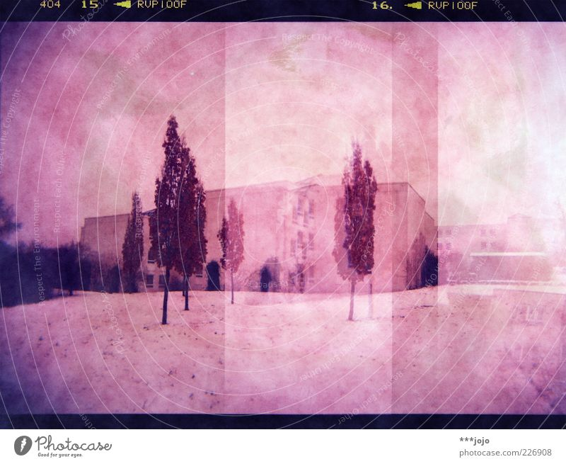 holgarama. Landscape House (Residential Structure) Town Pink Holga Lomography Analog Frame Cross processing Snow Snowscape Cold Tree Modern Modern architecture