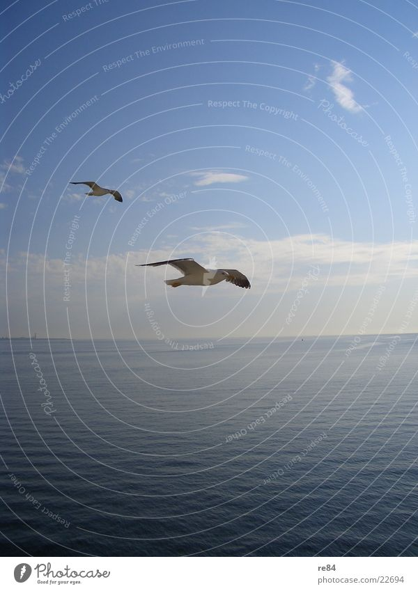 Water White Ocean Blue Clouds Animal Flying Aviation Wing Clarity Seagull North Sea Netherlands