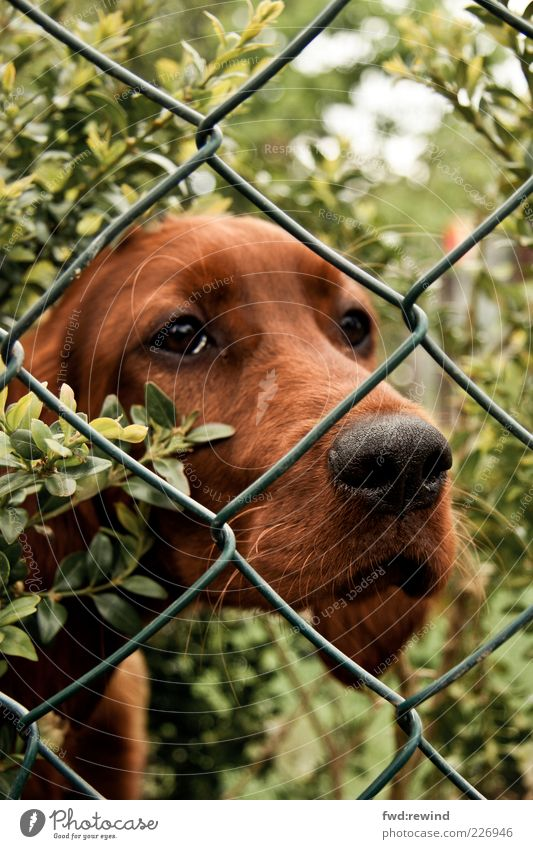 Nature Green Calm Animal Garden Style Dog Sadness Brown Baby animal Wait Animal face Observe Pelt Fence Pet