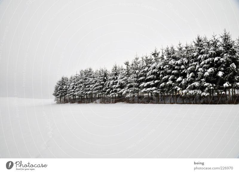 Tree Winter Snow Landscape Growth Fir tree Spruce Plantation Tree nursery Manmade landscape