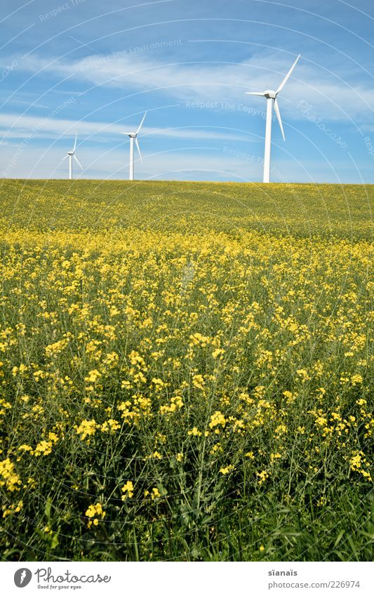 Sky Nature Summer Yellow Environment Landscape Germany Field Climate Energy industry Future Change Wind energy plant Beautiful weather Environmental protection Canola