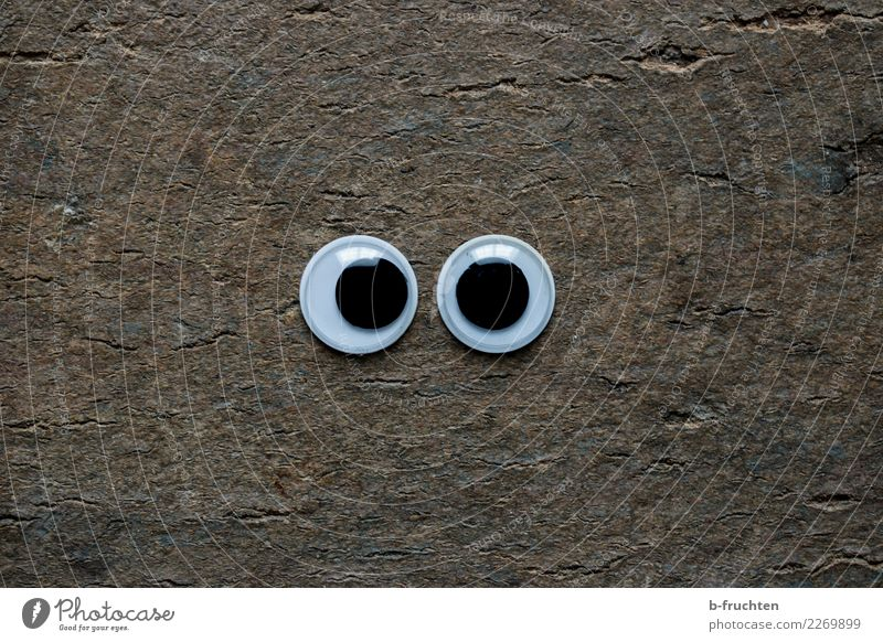 saucer eyes Meditation Eyes Wood Observe Discover Looking Simple Large Round Nature Curiosity Religion and faith Surveillance Environment Children's eyes