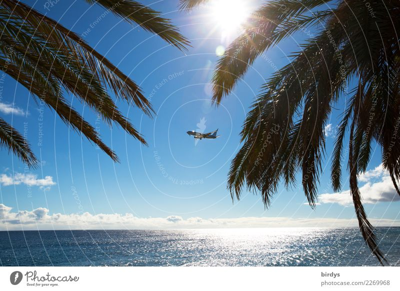 holiday pilots Exotic Vacation & Travel Tourism Far-off places Summer vacation Sun Ocean Cloudless sky Sunlight Beautiful weather Palm tree Palm frond Aviation