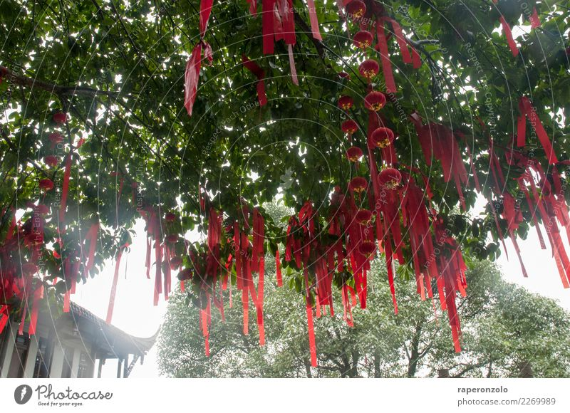 Red lucky charms hanging from a tree in a temple in China Good luck charm Temple Colour photo Asia Buddhism Religion and faith Exterior shot Culture Tourism
