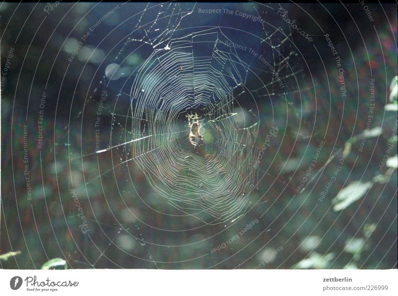 spider Environment Nature Plant Spider Bright Spider's web Orb weaver spider Cross spider Colour photo Exterior shot Deserted Copy Space left Copy Space right