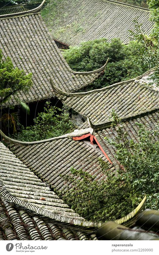 Vacation & Travel Green Relaxation Leaf Calm Architecture Tourism Gray Hiking Crazy Simple Protection Roof Safety Manmade structures Mysterious
