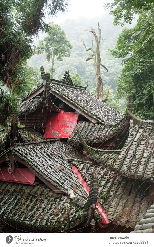 Sichuan Calm Meditation Vacation & Travel Tourism Hiking Sky Forest Roof Exotic Far-off places Gray Green China Asia Jinxed Tree Cuddling Together Hide Red