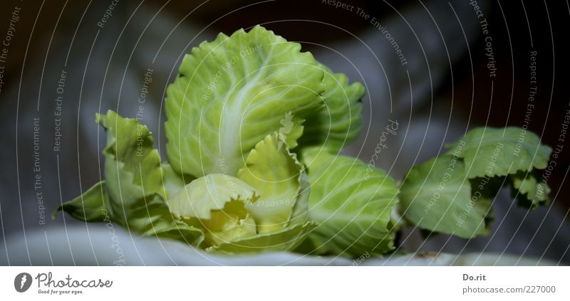 Cabbage for 200.000 Food Vegetable Nutrition Lunch Dinner Picnic Diet Senses Leaf Green Bright green Rachis Delicious Colour photo Subdued colour Interior shot