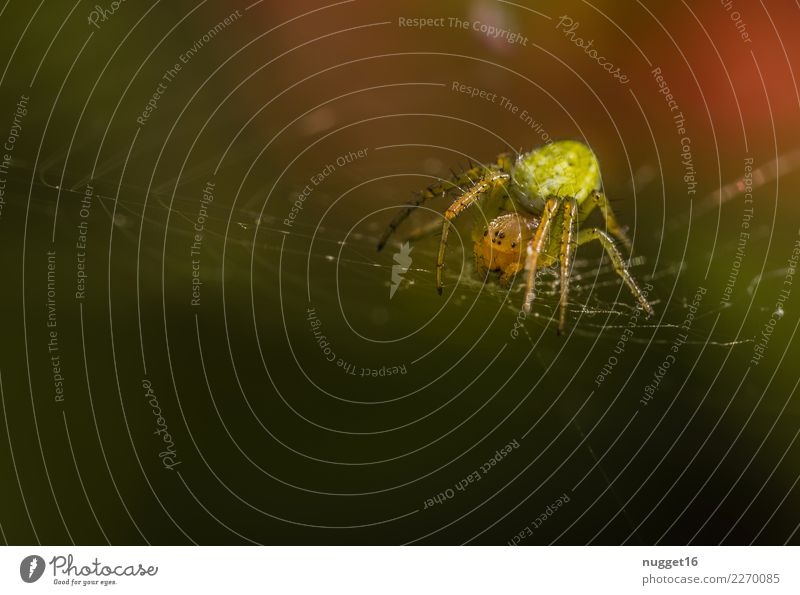 pumpkin spider Environment Nature Animal Sunlight Spring Summer Autumn Beautiful weather Garden Park Meadow Field Forest Wild animal Spider Animal face