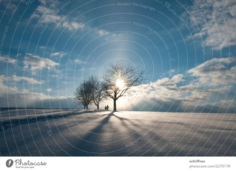 Human being Sky Nature Plant Blue Beautiful Landscape White Sun Tree Clouds Winter Far-off places Environment Cold Snow