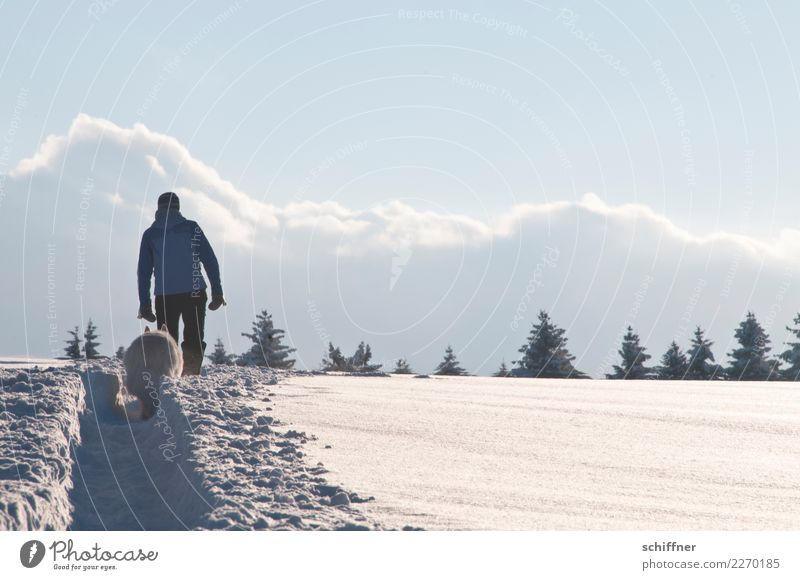 Large gauge Human being 1 Environment Nature Landscape Sky Clouds Winter Beautiful weather Ice Frost Snow Plant Tree Hill Animal Pet Dog Going Hiking Cold White